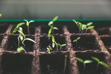 plant seeds